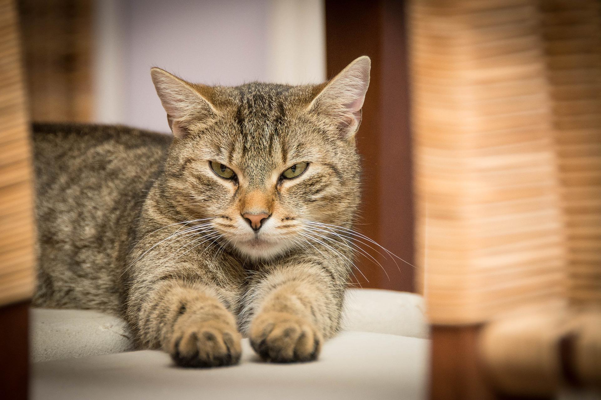 Allmänt om katter