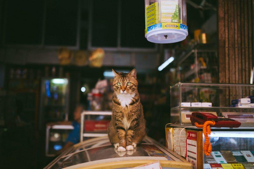 Katt på en bänk