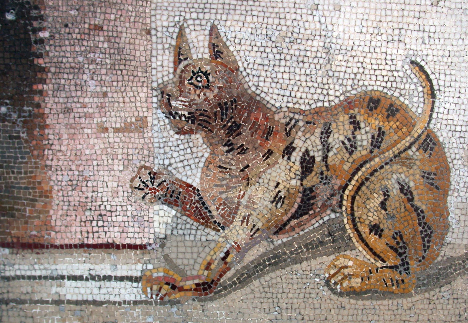 Historik om katter