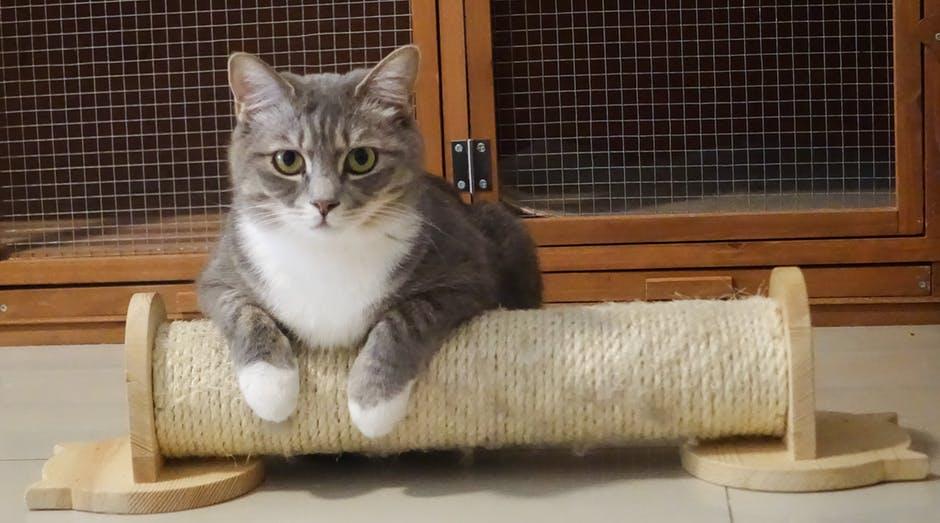 Katt som ligger på klösbrädan